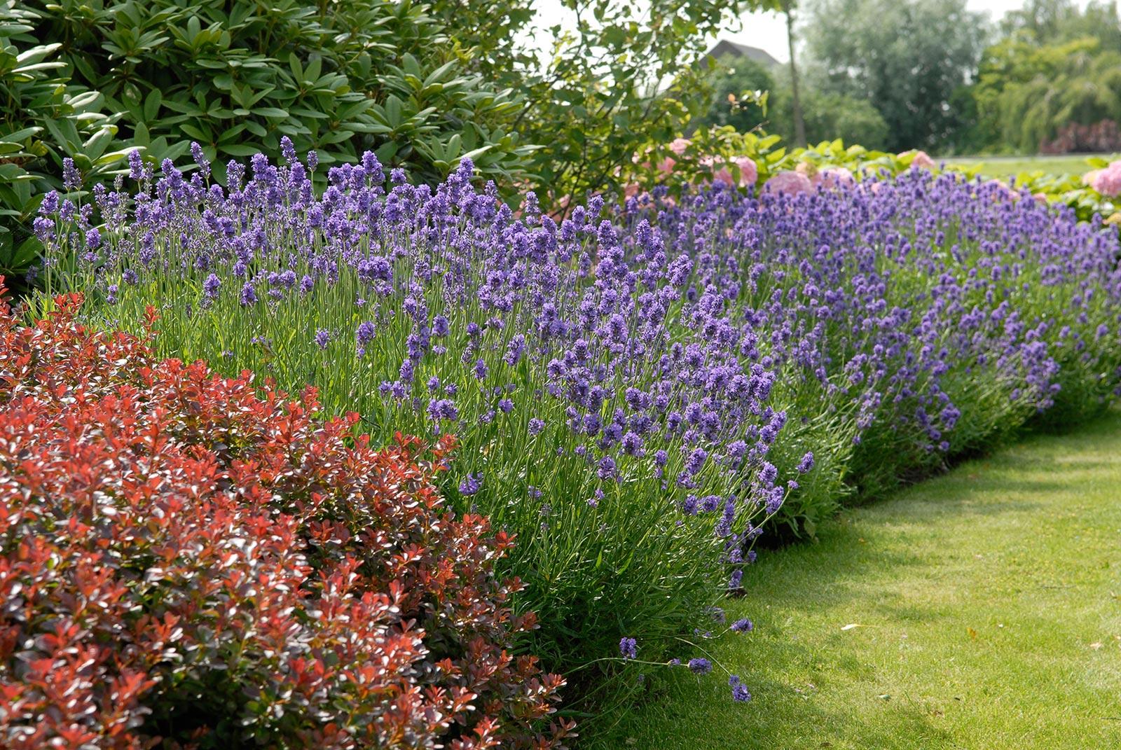 Bloemen en planten in de tuin ramon brand